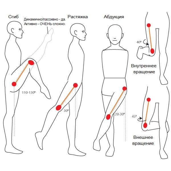 Как растянуть тазобедренный сустав острая боль в плечевом суставе лечение