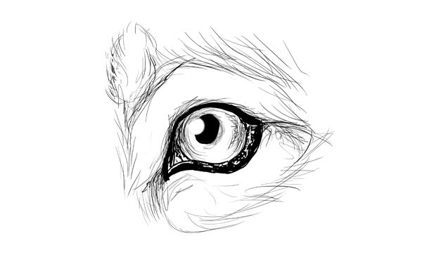 Волчий глаз как нарисовать
