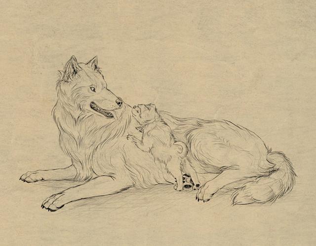 Анатомия волка для художника фото 634-824