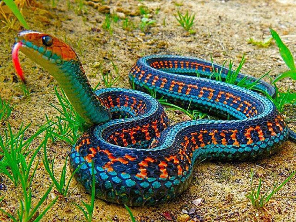 проведенное самые красивые змея в мире они служили долгой