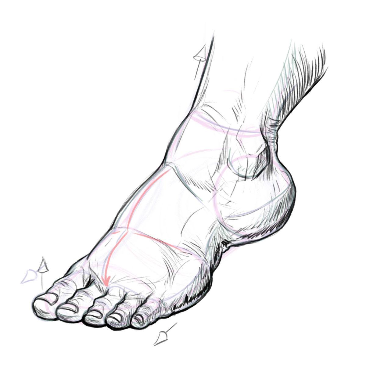 желаю нарисовать картинки ногой кружка принимают