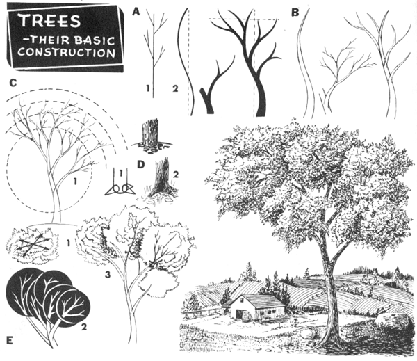 Строение деревьев